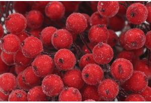 Калина сахарная, 12 мм, красная, пучок 40 ягод
