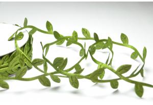 Лента резная Листики 2,5 см, темно-зеленая